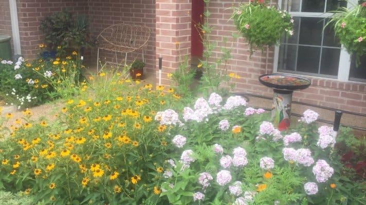 Perennials, Flowers Forever