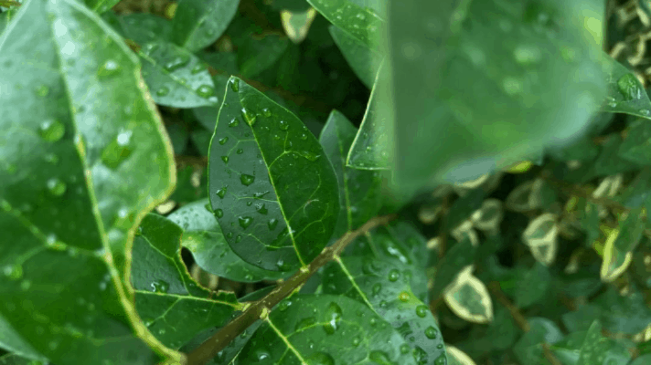 Rainwater is Gold